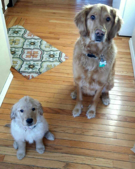 """""""With our cuteness combined, there's no way we won't get all the snackies."""""""