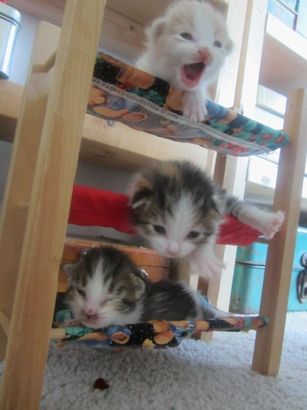 """""""WOAH, being on the top bunk is kinda scary when you're this little!"""""""