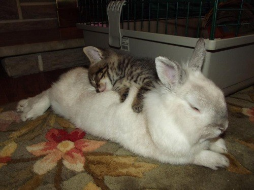 """""""You may call me tiny but I am the perfect size for snuggling."""""""