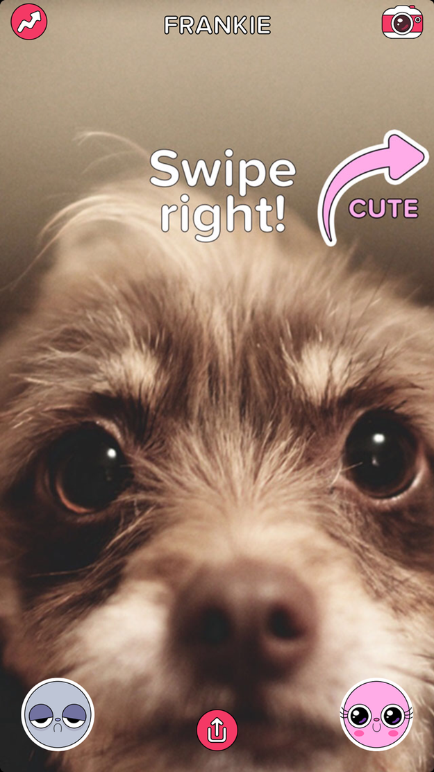Swipe right when you see someone cute! (This will happen very often.)