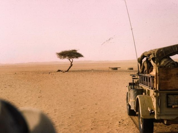The most isolated tree in the world was located in the middle of the Sahara Desert in Niger.