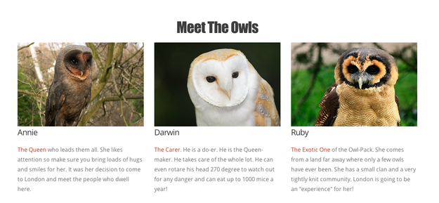 The owls are professionals, the organisers tell BuzzFeed Life.