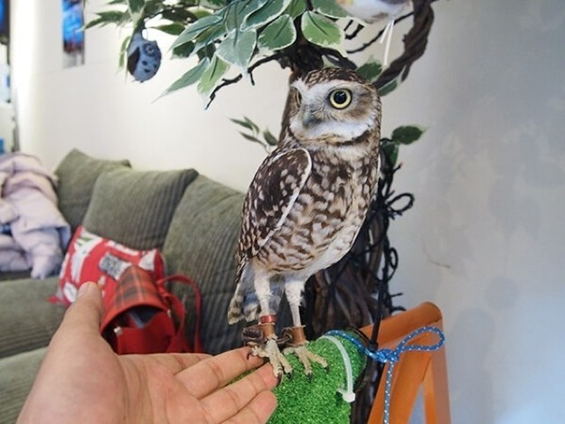 There are owl cafés in Japan and they are amazing.