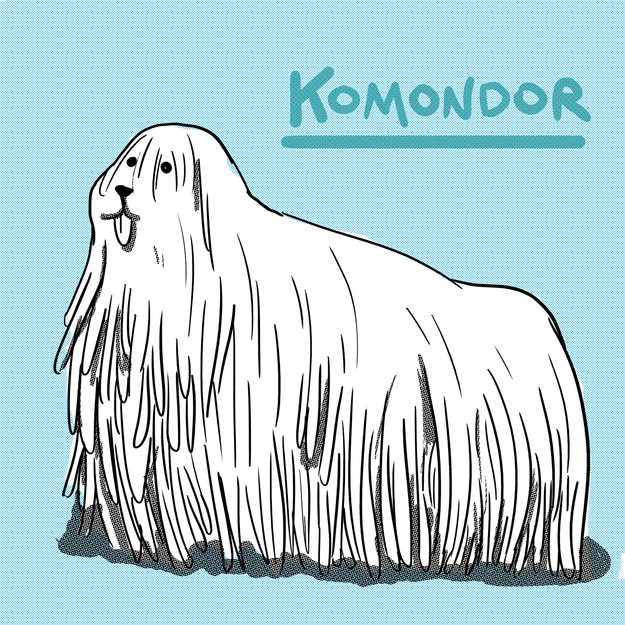 There's a Hungarian dog called a Komondor that looks like the three-way lovechild of an albino Rasta, a janitor's mop, and some shredded documents.