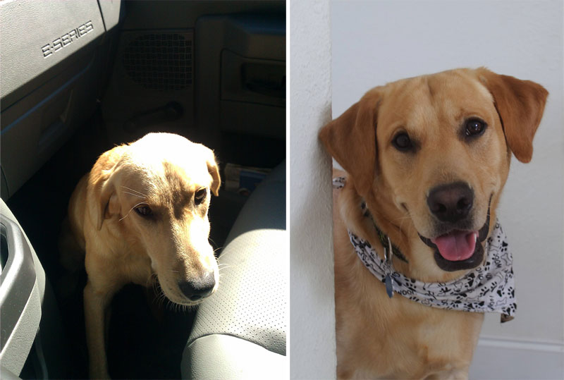 before and after pics of adopted dogs (17)
