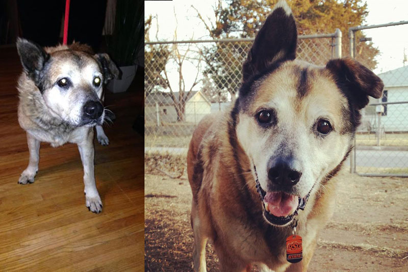 before and after pics of adopted dogs (7)