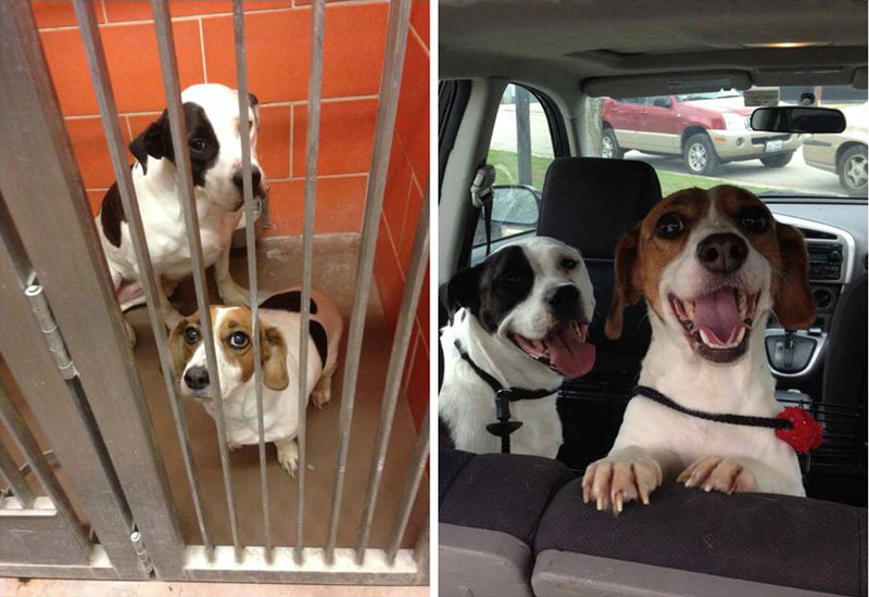 two dogs adoption happiness then and now sad happy