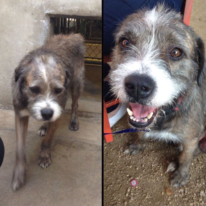 before and after pics of adopted dogs (6)