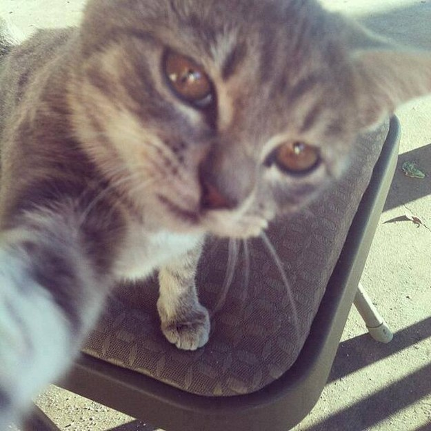 This cat who spends too much of her time taking selfies.