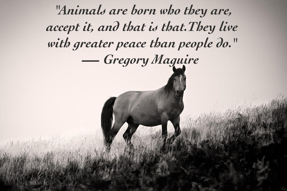 Animals Quotes Entrancing 25 Quotes About Animals That Will Make You A Better Human