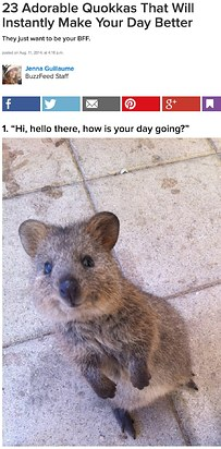 25 Selfies That Prove Quokkas Are The Happiest Creatures On Earth