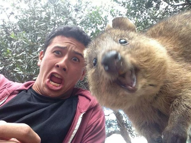 A year ago this photo was uploaded to the internet and people begun taking selfies with quokkas.