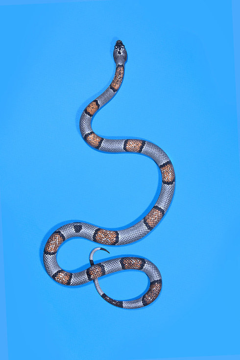 """An Artist Took A Gorgeous Photo Series Of Snakes To Deconstruct """"Slitherstitions"""""""