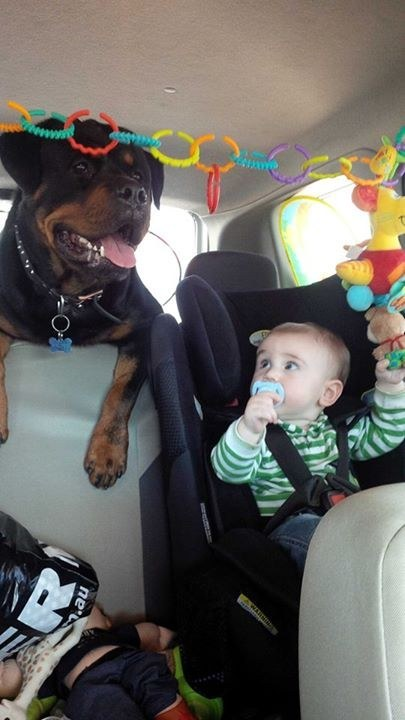 And they just hate car rides so much.