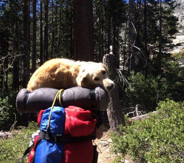 And this gentleman who carried his favorite lady home after their long camping trip.