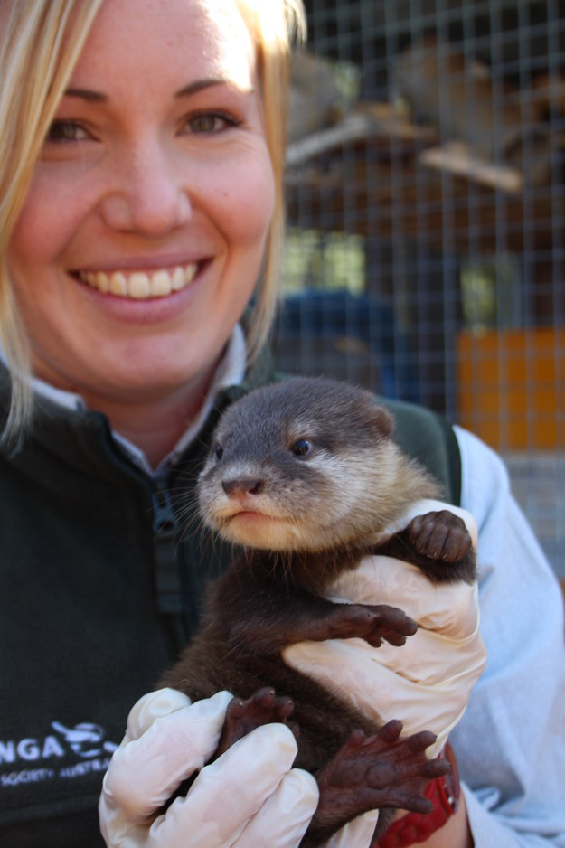 But enough about the otters, let's just look at these cute pictures of them, like this one...