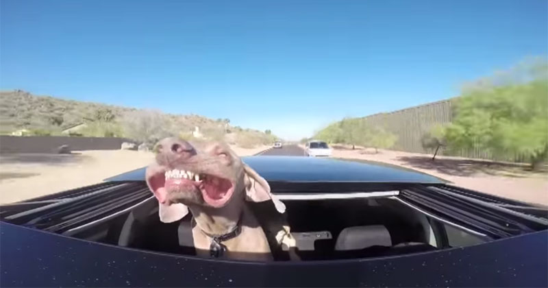 Camera Captures Dog on Car Ride with Sunroof Open