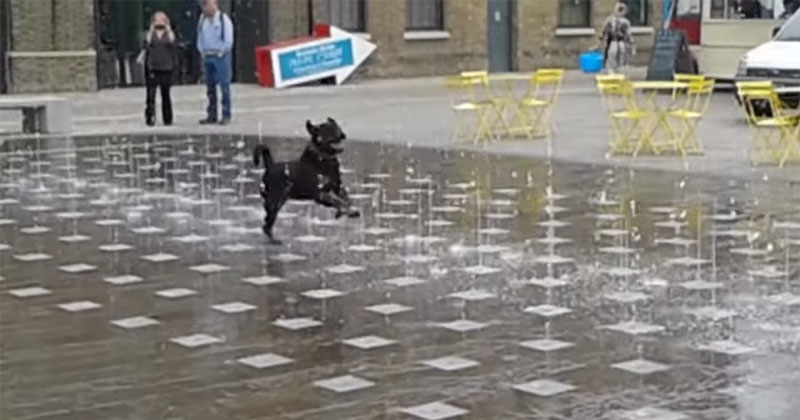 Dog Reminds Us to Enjoy the Simple Pleasures in Life