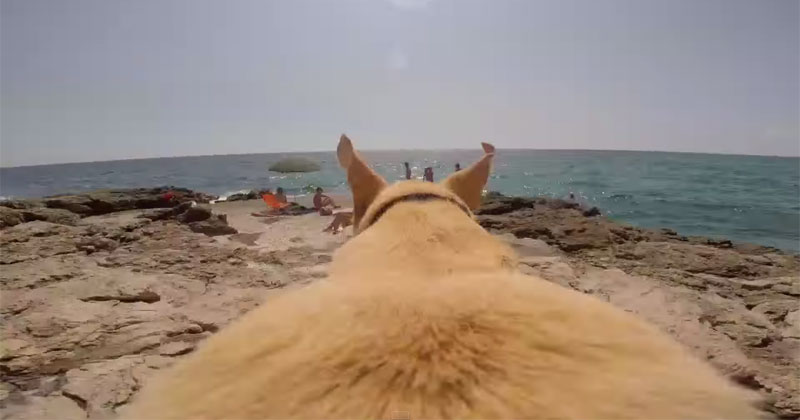 Dog Runs as Fast as He Can to Jump Into the Water