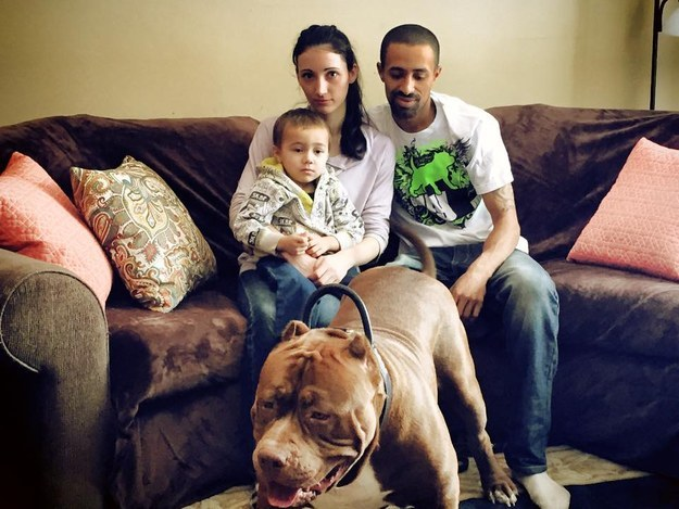 He lives with the Grannan family. His owners Marlon and Lisa run Dark Dynasty K9s, a kennel that specializes in pit bull terriers.
