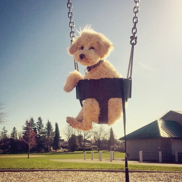 HIS NAME IS PITA AND HE'S IN A SWING.
