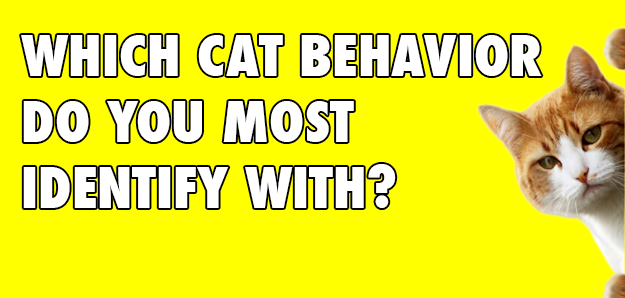 How Much Of A Cat Person Are You