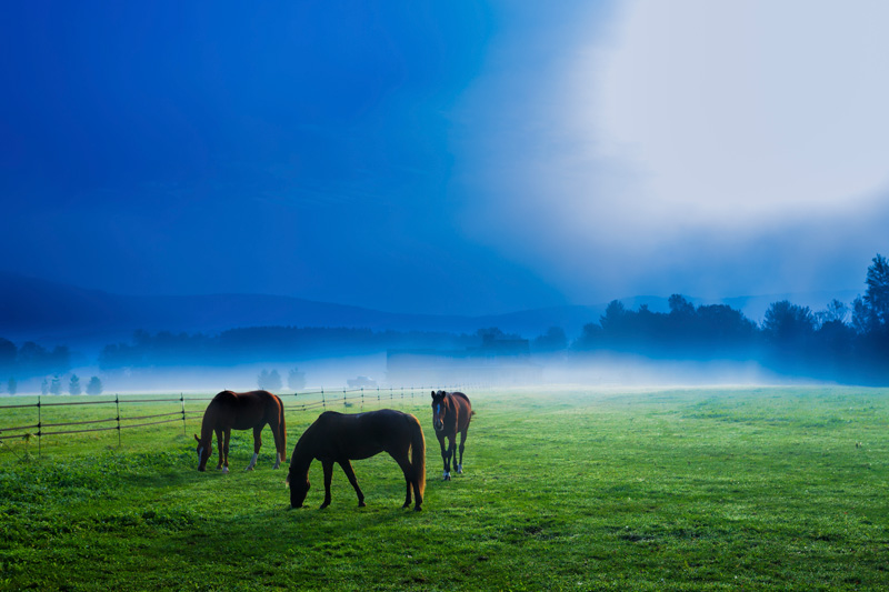 Horses in an early morning foggy field, Stowe, Vermont, USA