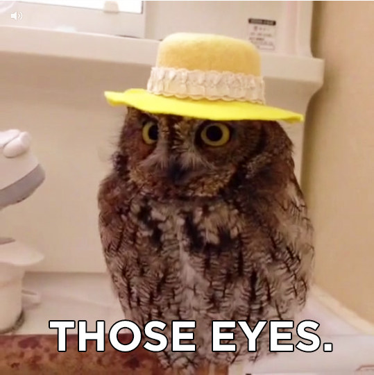 LOOK AT THE HAT-WEARING OWL.