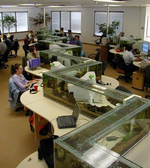 Office Aquarium Doubles as Desk Divider
