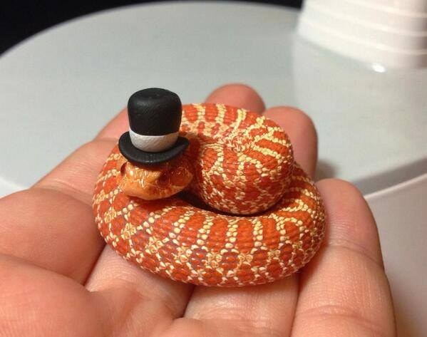 """""""I came here in my nice hat to ask you something, Ireland. Please let us back in?"""""""