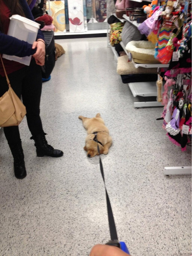 """""""Shopping is boring and I refuse to participate goodbye."""""""