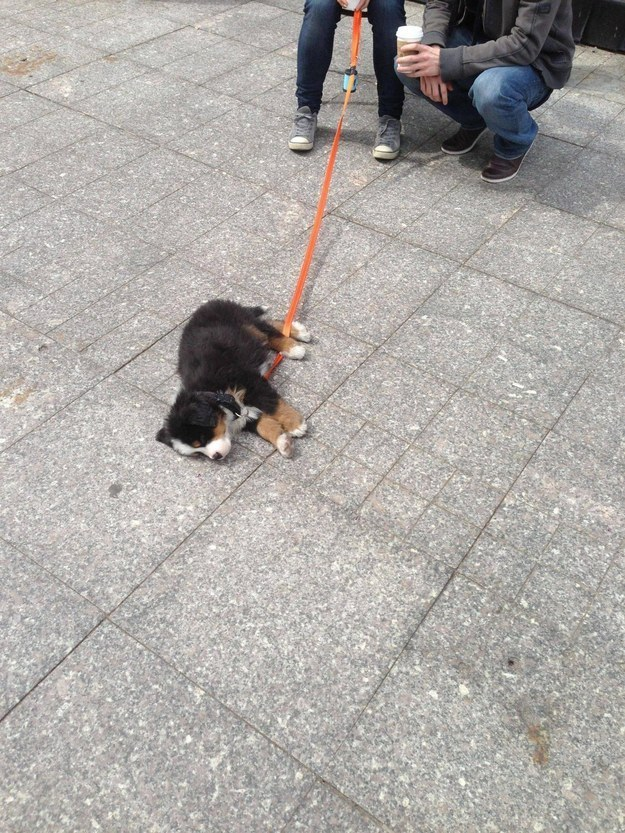 """""""This is my protest against walking today because ENOUGH IS ENOUGH."""""""