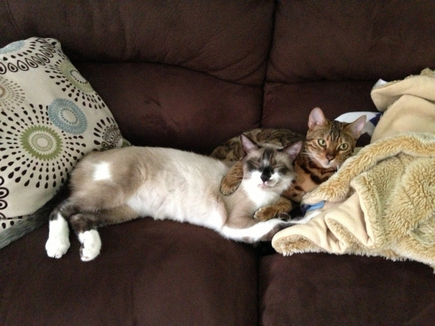Rescue cats will never be able to get along with any other cats.