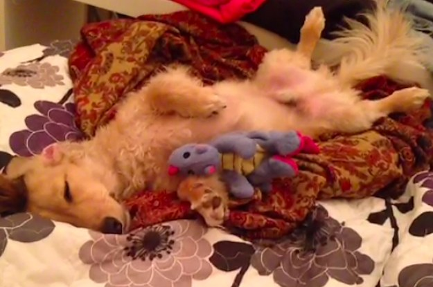 The 27 Laziest Dogs Of All Time