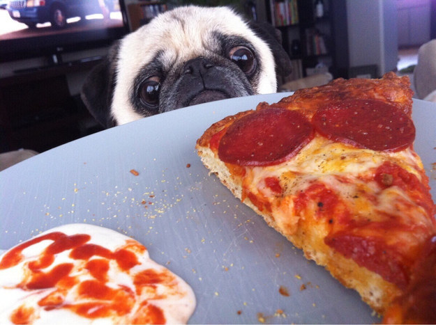 14 Animals That Perfectly Express Your Relationship With Food