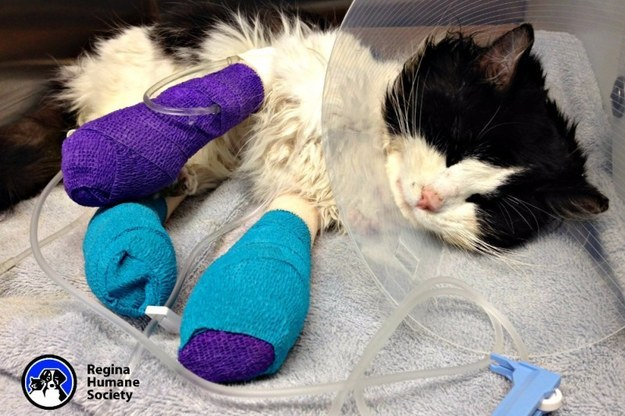 The Humane Society says they are trying to avoid amputation, but Bruce's front left leg will likely need to be removed.
