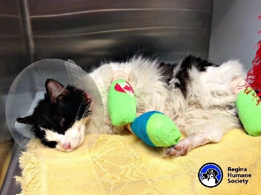 The severity of the injuries inspired The Regina Humane Society to start a GoFundMe page to see if people could help save Bruce Almighty's life.
