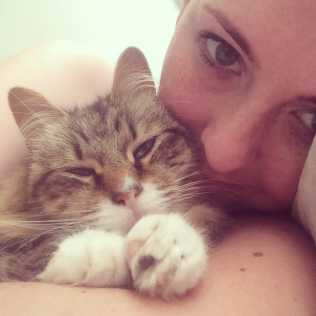 23 Reasons You Should Never Rescue A Cat