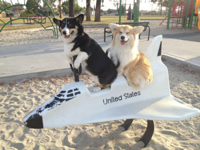 23 Corgis Who Made The World A Better Place