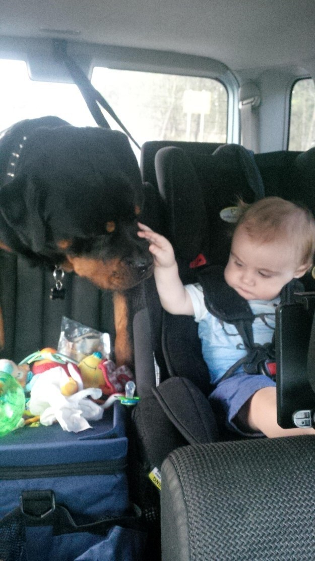 They are so good at babysitting that they're taking jobs away from humans.