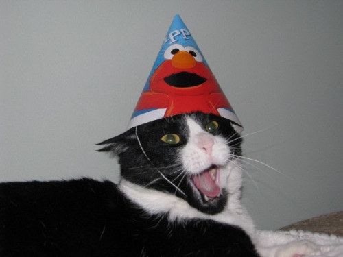This cat who cannot handle his birthday hat.