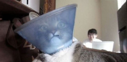 This cat who cannot with this cone and cannot with his dumb brother behind him.