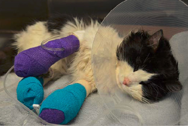 People Have Raised Over $12,000 To Help Save This Bandaged Cat's Life