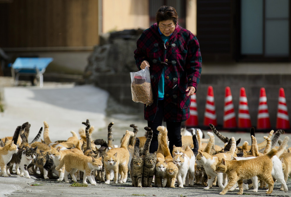 This is village nurse and city official Atsuko Ogata, and she's here to feed the cats.