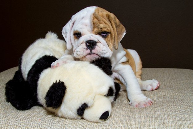 17 Puppies For Anyone Who's Having A Bad Day