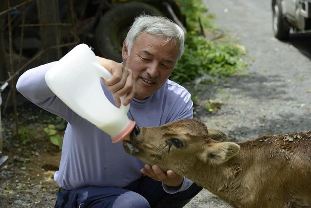 This Man Went To Live In A Radioactive Town To Care For The Abandoned Animals