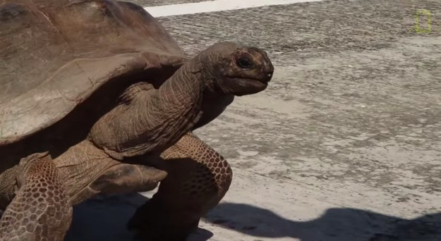 This was one seriously pissed off tortoise.