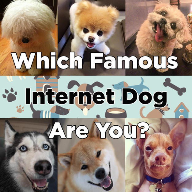 What Famous Internet Dog Are You
