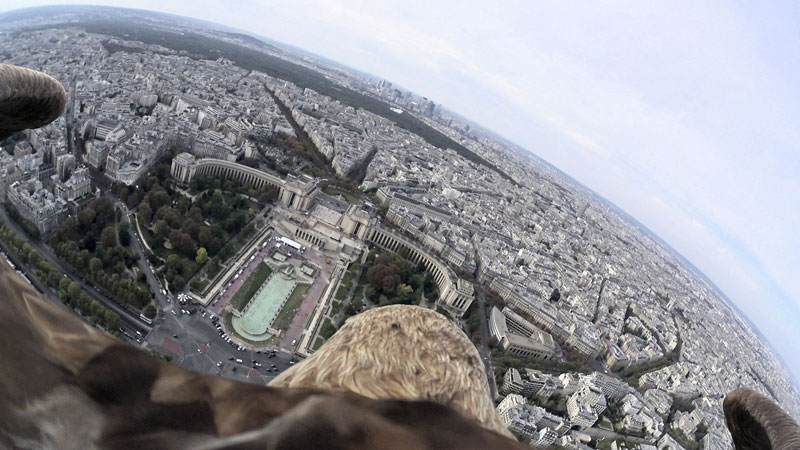 What Paris Looks Like from an Eagle's POV