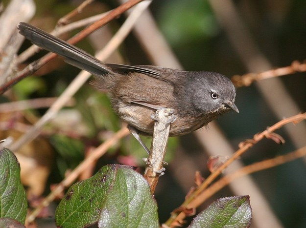 Wrentit never rents it, only buys.